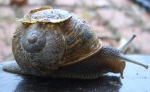 slow and steady snail