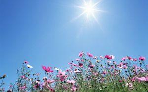 blue skies_sunlight_blooming flowers